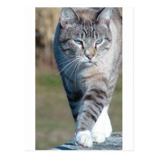 Caminhada de gato cartão postal