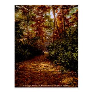 Caminhada de Rhodedendrum, cartão dos EUA do vinta Cartoes Postais