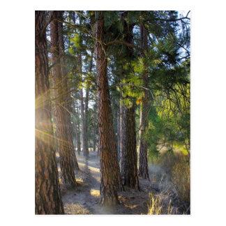 Caminhada do amanhecer cartões postais