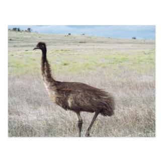 caminhada do emu cartão postal