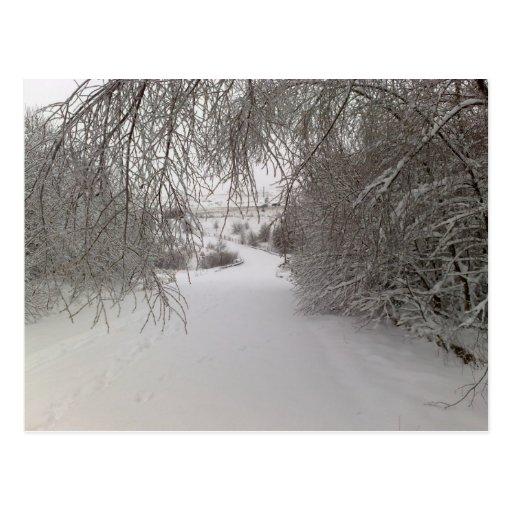 caminhada do inverno cartoes postais