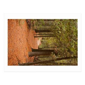 Caminhada do outono cartão postal
