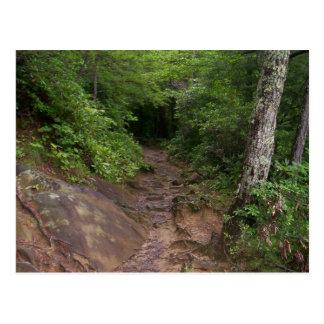Caminhada em Great Smoky Mountains Cartão Postal