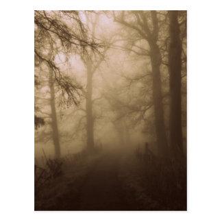 Caminhada enevoada nas madeiras - fotografia da cartão postal