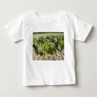 Camiseta Alface fresca que cresce no campo