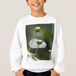 Camiseta Botões do arbusto da alcaparra, Capparis spinos.