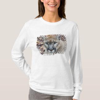 camiseta de puma o de pantera