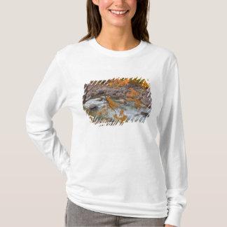 Camiseta WA, floresta nacional de Wenatchee, árvore de