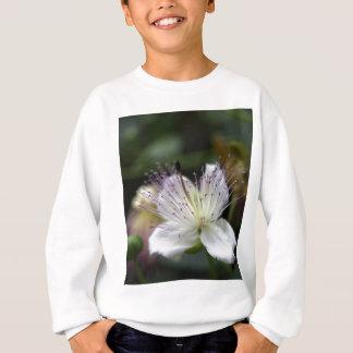 Camisetas Flor do arbusto da alcaparra, Capparis spinos.