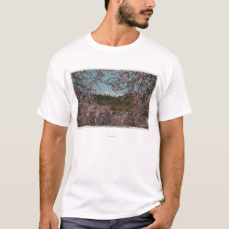 Camisetas Wenatchee, WAView da caxemira do Mt. com árvores