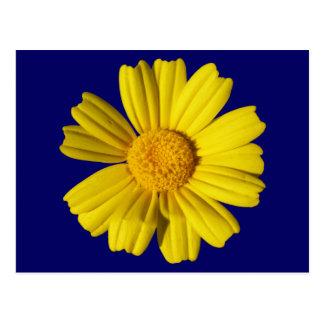 Camomila amarela ensolarada cartão postal