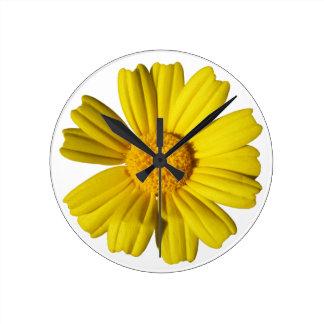Camomila amarela ensolarada relógios para paredes