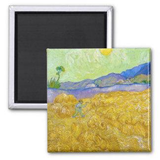 Campos de trigo com a ceifeira no nascer do sol ímã quadrado