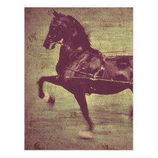 Canção de Saddlebred Cartão Postal