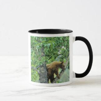 Caneca A canela coloriu o urso preto na árvore do álamo