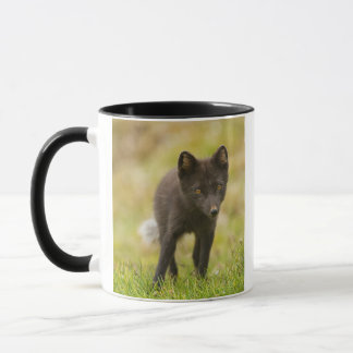 Caneca Buscas da raposa ártica para a comida