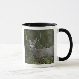 Caneca Fanfarrão dos cervos de mula que consulta na