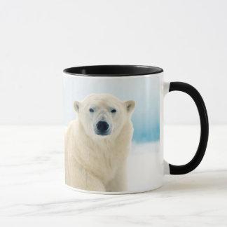 Caneca Grande varrão adulto do urso polar no gelo do