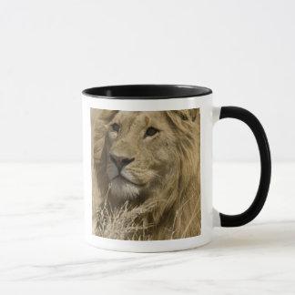 Caneca Leão africano, Panthera leo, retrato da