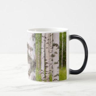 Caneca Mágica árvores de vidoeiro em florestas finlandesas