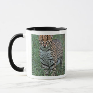 Caneca Pardalis) de Leopardus do OCELOT AMÉRICA CENTRAL