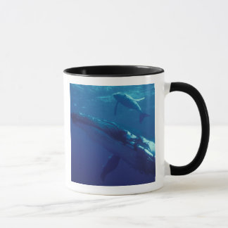 Caneca South Pacific, Tonga. baleia e vitela de humpback