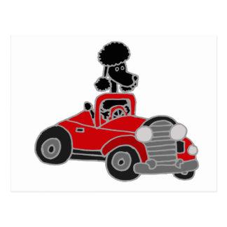 Caniche preta que conduz o carro convertível cartão postal