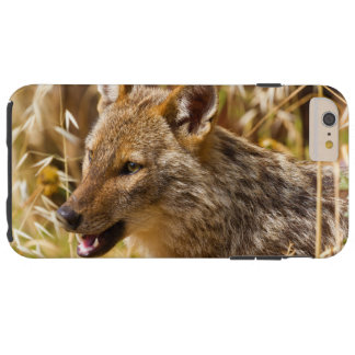 Canis dourado do chacal áureo capas iPhone 6 plus tough