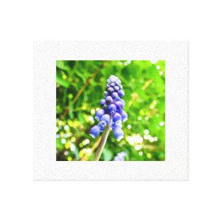 Canvas azuis da flor - jacinto de uva