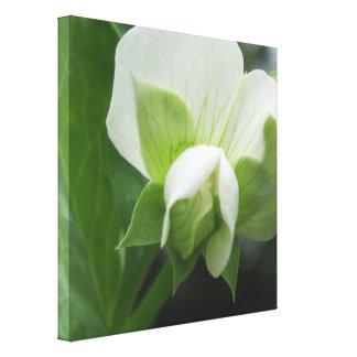 Canvas botânicas originais da arte da flor da