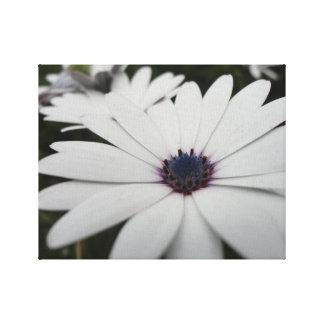 Canvas da flor branca