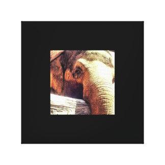 Canvas do elefante