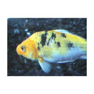 Canvas do peixe dourado