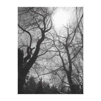 Canvas pretas & brancas do sol abstrato da árvore