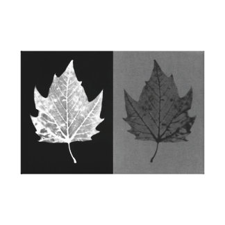 Canvas preto e branco das folhas de outono
