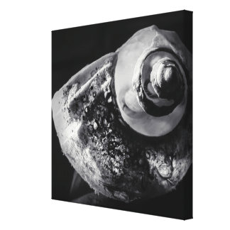 Canvas preto e branco de Shell