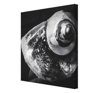 Canvas preto e branco de Shell Impressão Em Tela