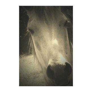 Canvas preto e branco do cavalo impressão de canvas envolvida