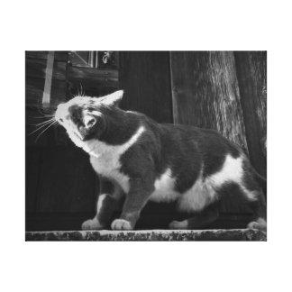Canvas preto e branco do gatinho do celeiro