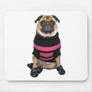 Cão acima vestido engraçado do pug com camisola e