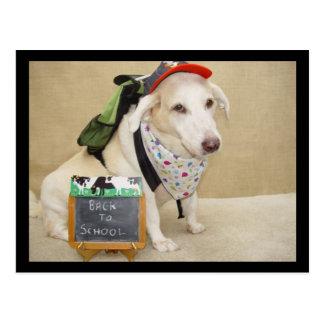 Cão bonito engraçado de volta à escola cartão postal