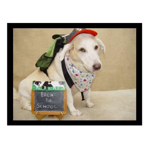 Cão bonito engraçado de volta à escola cartao postal