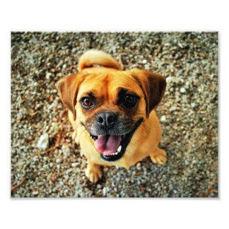 Cão bonito impressão de foto