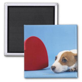 Cão com coração ima