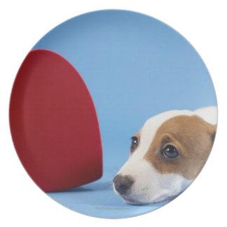 Cão com coração prato