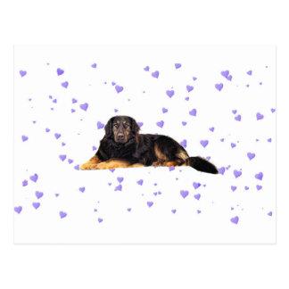 Cão com corações roxos de queda cartão postal