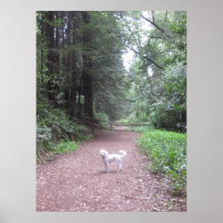 Cão da natureza poster