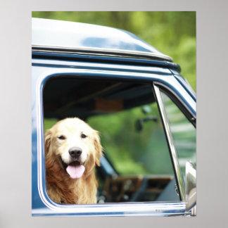 Cão de estimação que senta-se em um carro poster