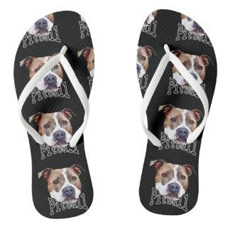 Cão de Pitbull Chinelos