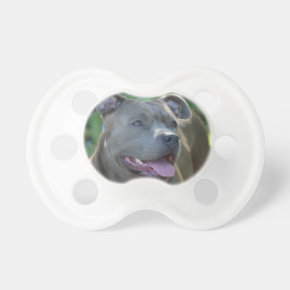 Cão do terrier de Pitbull Chupeta De Bebê